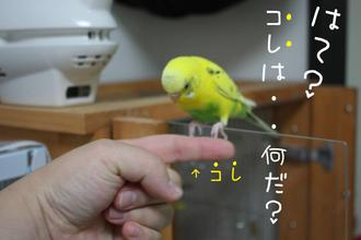 2008_11110071
